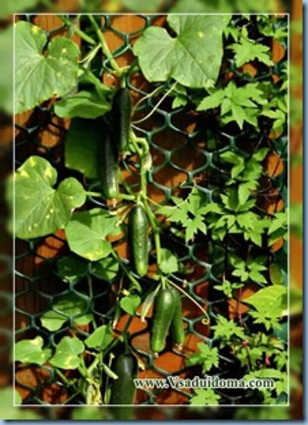 Вертикальное озеленение на даче и вертикальный огород своими руками