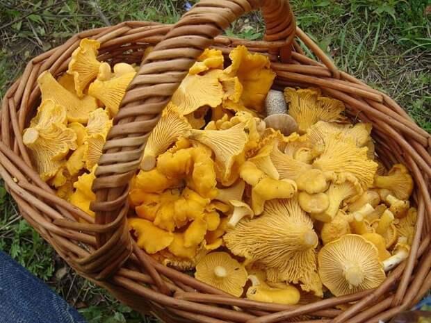 Ягоды годжи грибы лисички Худеем вместе!