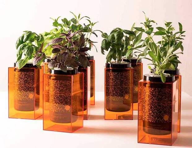 Гидропоника и серамис комнатных растений