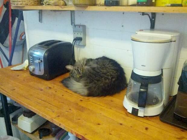8. Один из них готовит кофе, другой поджаренный хлеб, а третий – комочки шерсти бытовая техника, ты упоротый что ли, юмор