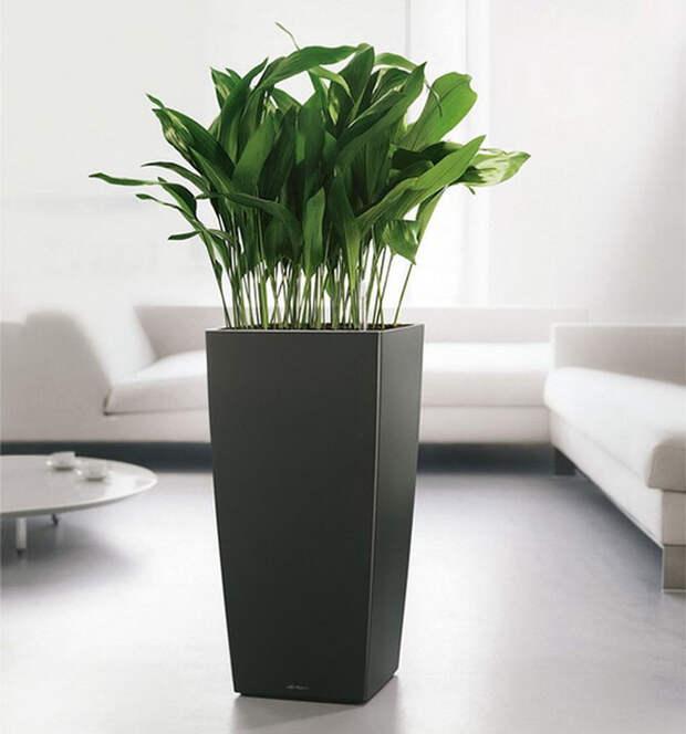 Неприхотливые растения для тех, у кого нет времени