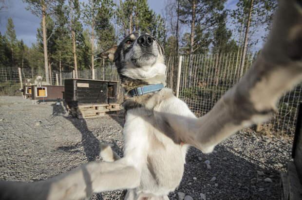 Эти собаки любят селфи больше, чем вы! селфи, собака