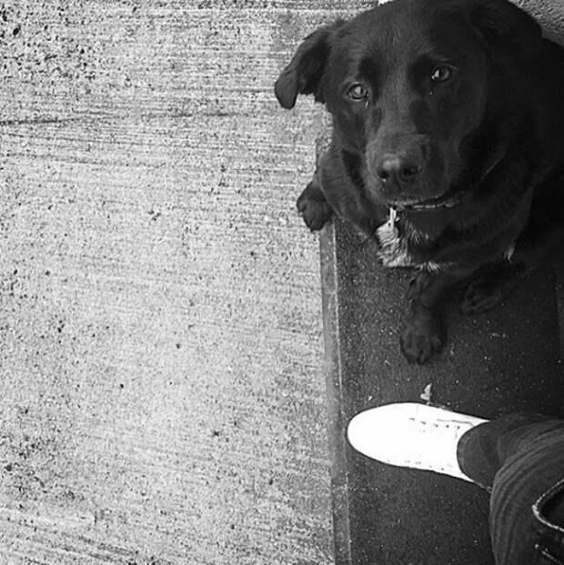 Собака до сих пор ждёт пропавшего футболиста