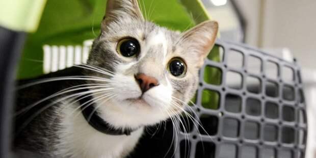 На Онежской потерявшему хозяйку коту нашли дом