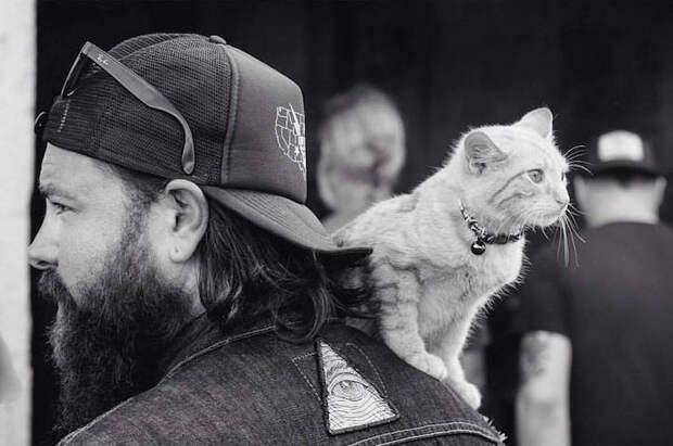 Байкер и кот