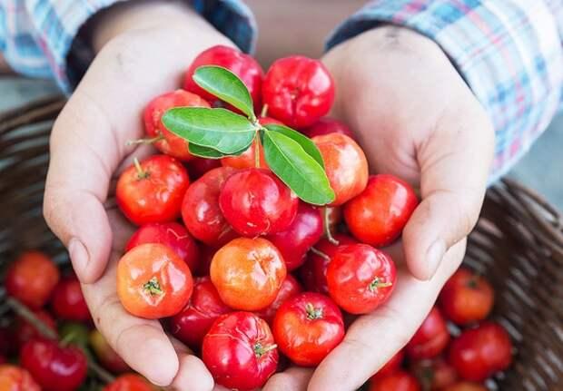 Время укреплять здоровье: в каких продуктах искать витамин C