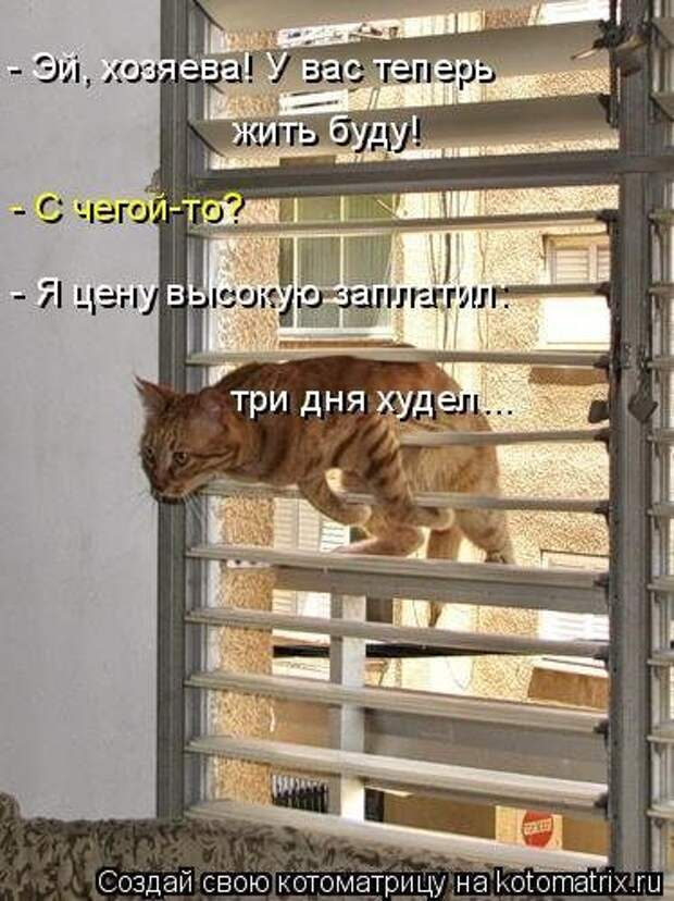 Крутые котоматрицы недели