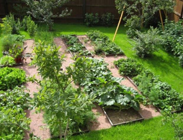 Для дачников и огородников! Чередование культур растений (севооборот)