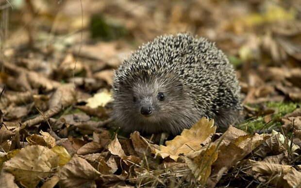 Чудесные фотографии животных в осеннем лесу. - 6 Октября 2012 - НАША ПЛАНЕТА. - Наша планета.Новости экологии