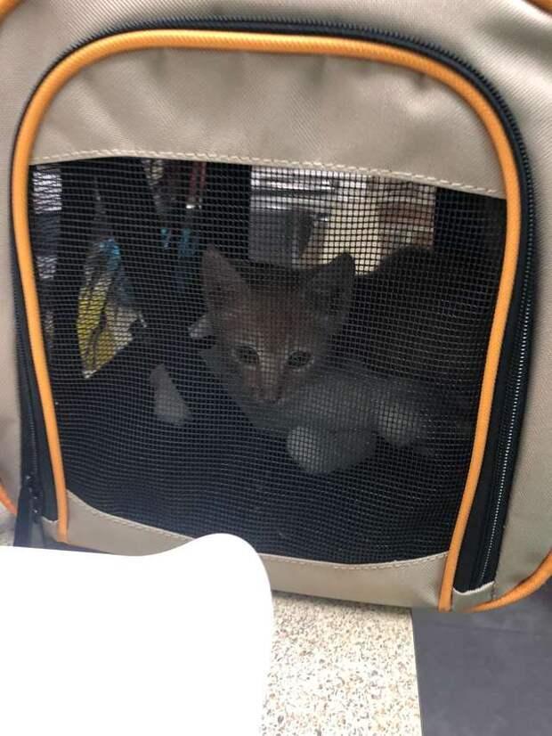 Молодой уличный кот был так напуган, что неделями не вылезал из узкой щели