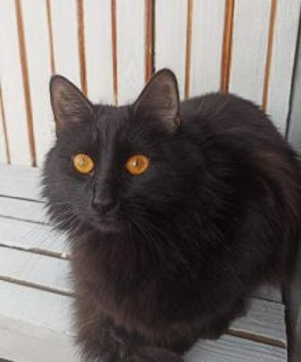 На улице Маршала Тухачевского чёрный кот выпал из окна