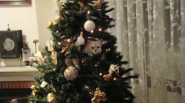 40. Еще один белый шарик елка, кошка, подборка