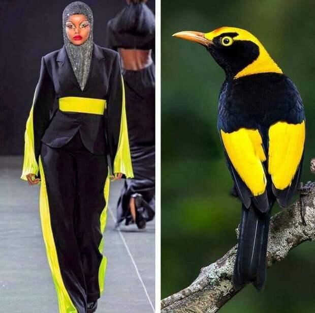 15 фотодоказательств, что мода черпает вдохновение в природе