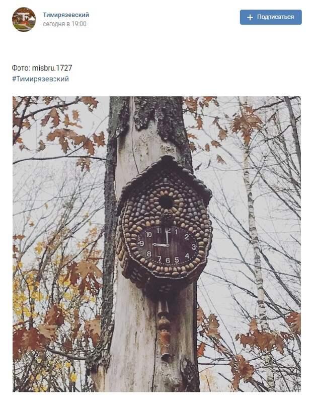 Фото дня: часы из желудей в Тимирязевском лесу