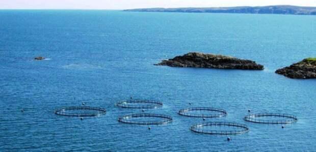 В Краснодарском крае будут развивать аквафермерство