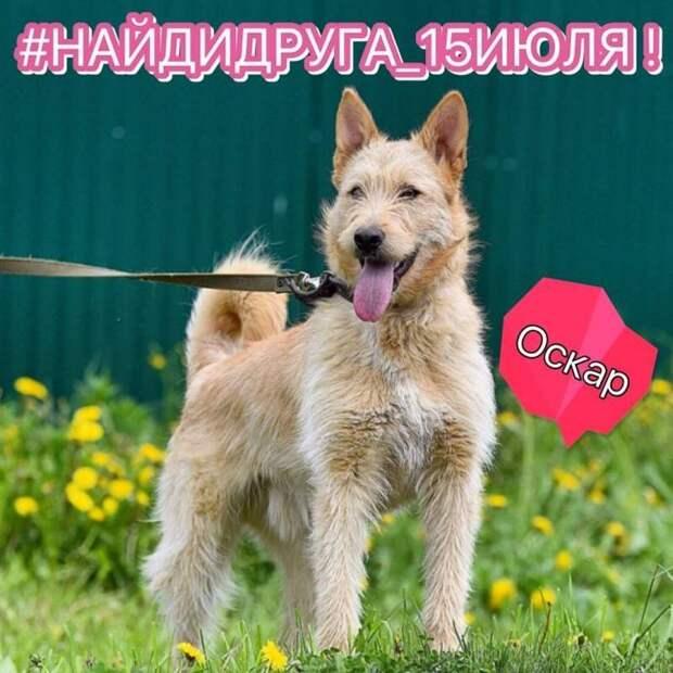 15 июля в парке «Новодевичьи пруды» пройдет семейный фестиваль с животными из приютов