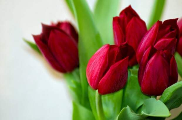 http://anydaylife.com/uploads/articles/miscellaneous/holidays/congratulations/short-congratulations-8-march-2.jpg