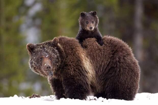 10 животных, которые знают, что мамина любовь — самая сильная