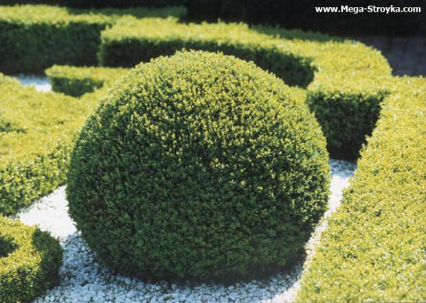 Декоративные кустарники для дачи и сада