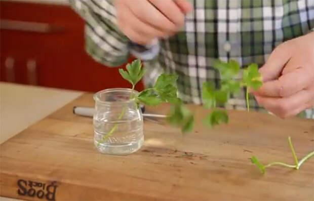 Он обрезал корешок капусты и поместил его в воду. Через неделю произошло чудо