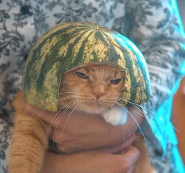 Прикольные животные, которых не плохо кормят животные, коты, прикол, юмор