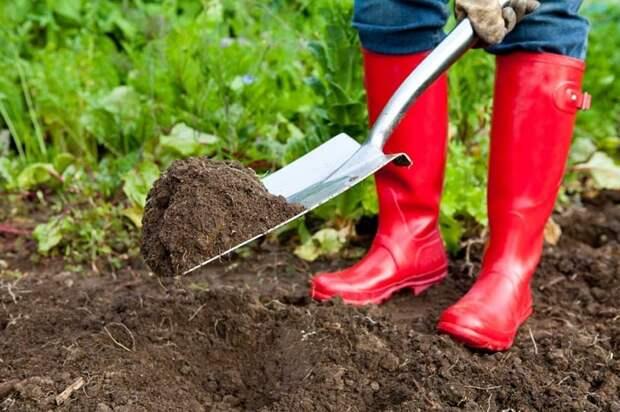 Торф для огорода – сплошная польза?