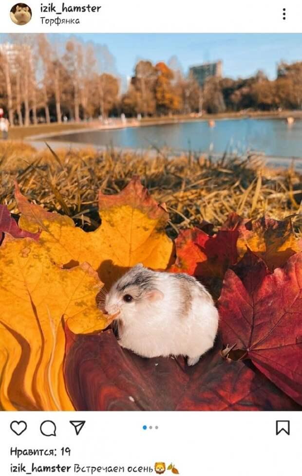 Фото дня: хомяк затерялся в осенней листве на Торфянке