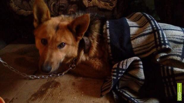 На трассе около Перми собака две недели ждала хозяина на одном месте