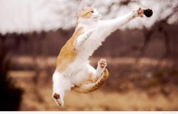 факты_кошки