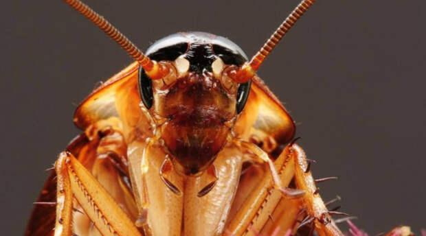 Тараканы Да, самых обычных тараканов также можно называть живыми ископаемыми. Эти неприятные насекомые появились на Земле примерно 350 миллионов лет назад. Ученые полагают, что тараканы станут единственным живым организмом, способным пережить даже ядерную зиму.