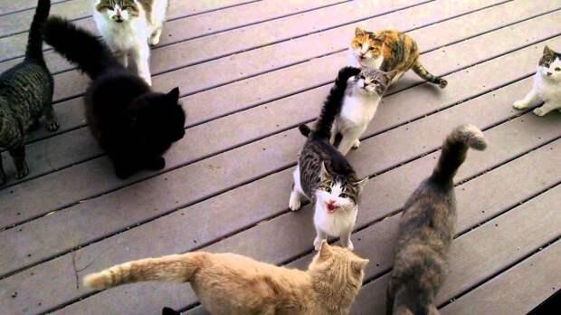 Вот что ждет хозяина более десяти кошек по утрам