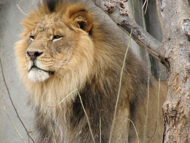 https://cdn.pixabay.com/photo/2015/03/07/05/21/lion-662830_960_720.jpg