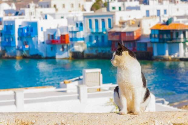 «Аэрофлот» снова испытывает проблемы с котами