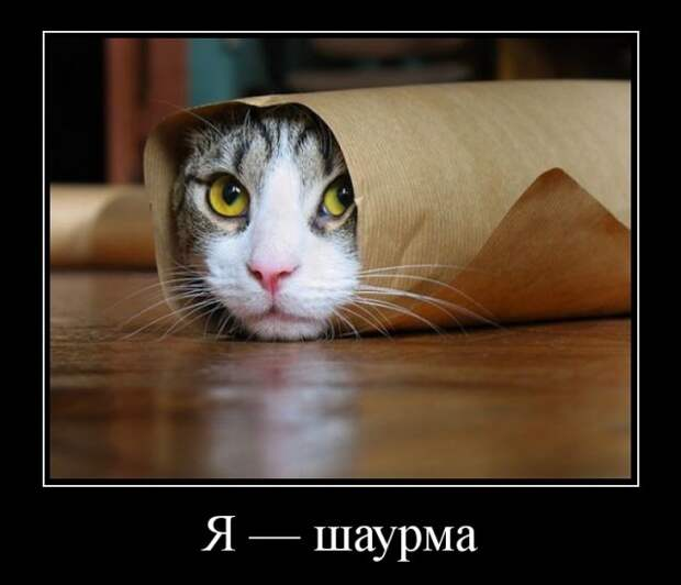 Подборка смешных и забавных демотиваторов со смыслом (11 фото)