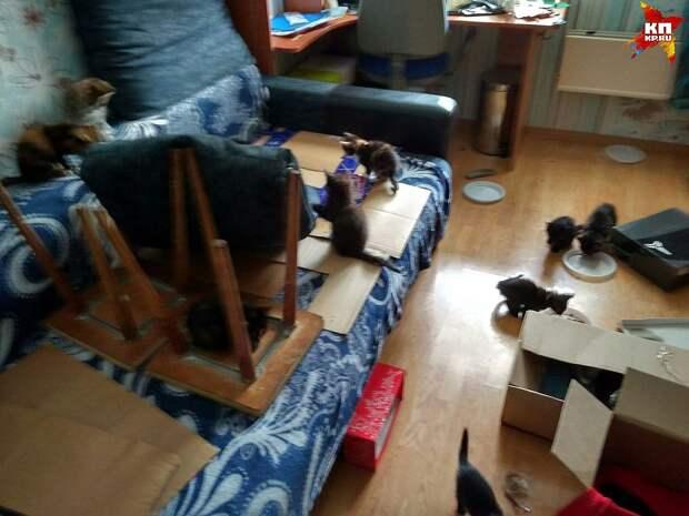 Пушистики уже освоились в квартире Андрея Фото: Андрей Горшунов