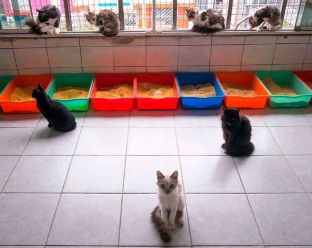 Кошки в приюте в Перу