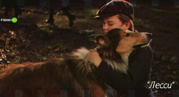 Собачья работа: звёздные роли четвероногих в кино кино, собаки, факты