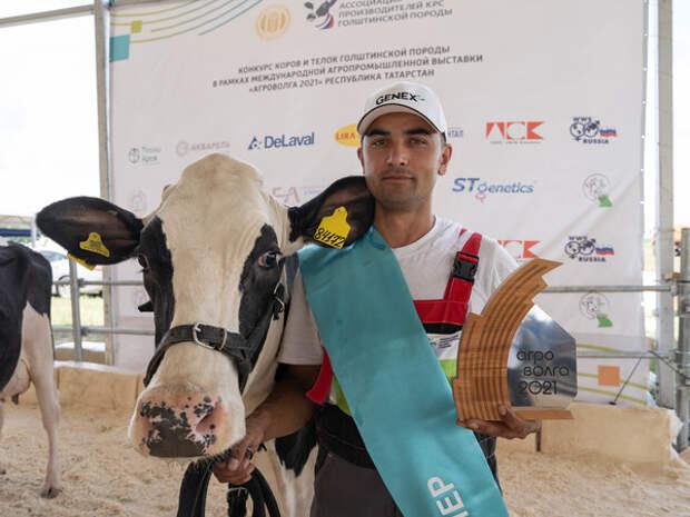 В Татарстане выбрали самых красивых коров и телок
