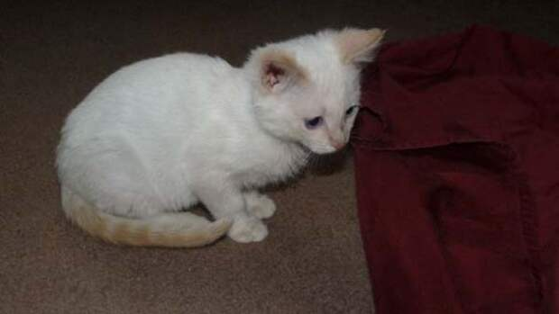 Спасение больного котенка, найденного на дне мусорки