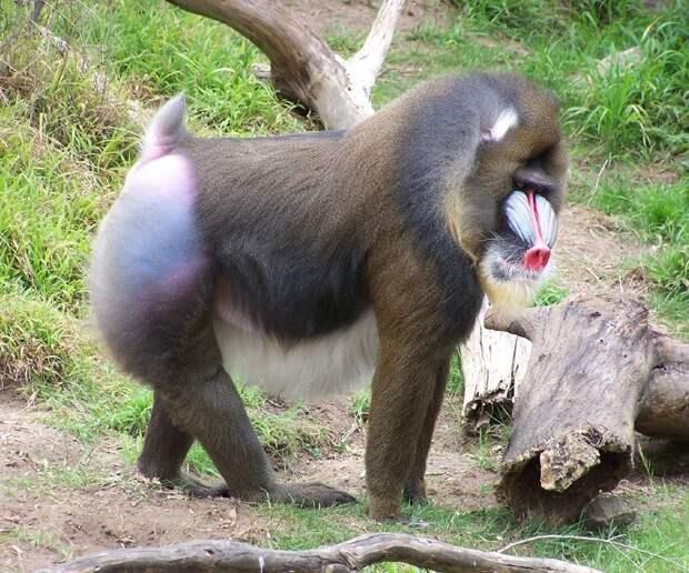 12 фактов о животных, которые доказывают, что природа и гений, и тролль одновременно
