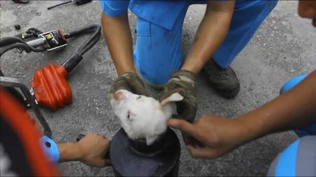 В Таиланде спасли щенка, застрявшего в трубе