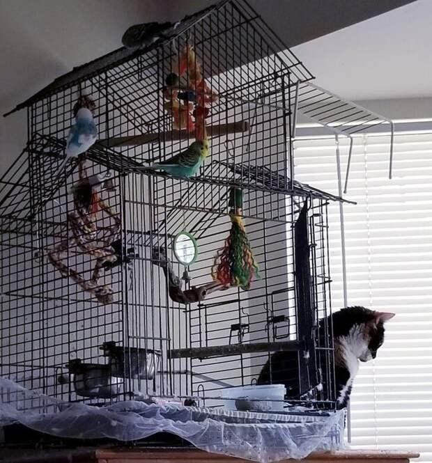За его спиной сидят четыре попугая, но он предпочитает наблюдать за… закрытыми жалюзи. интересное, кошки, фотографии