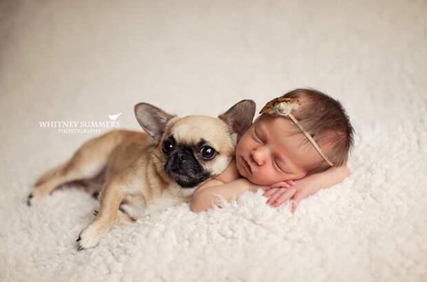 младенцы и собаки первая фотосессия (3)