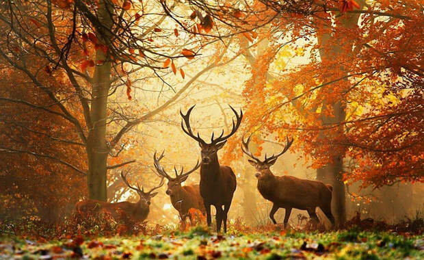 осень и животные 1 (700x429, 495Kb)