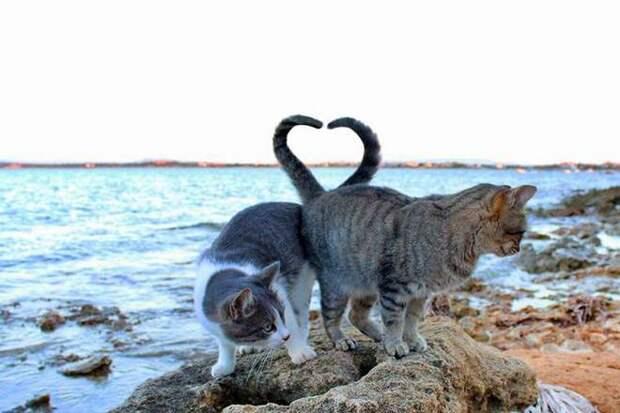 кошки могут пить морскую воду