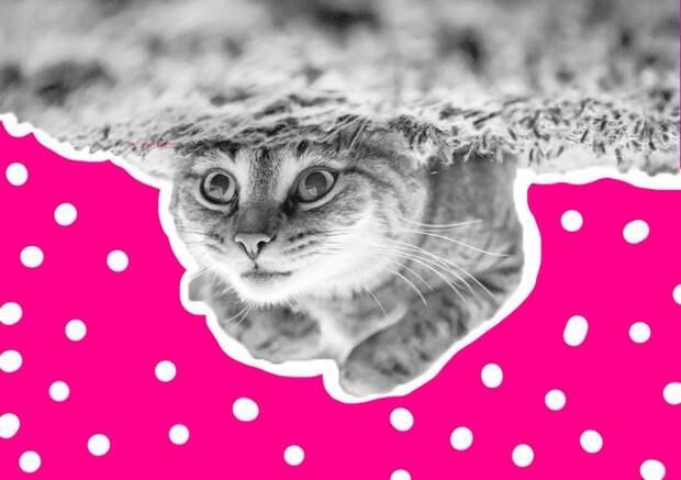 Кошкин дом: шьем лежанку для питомца