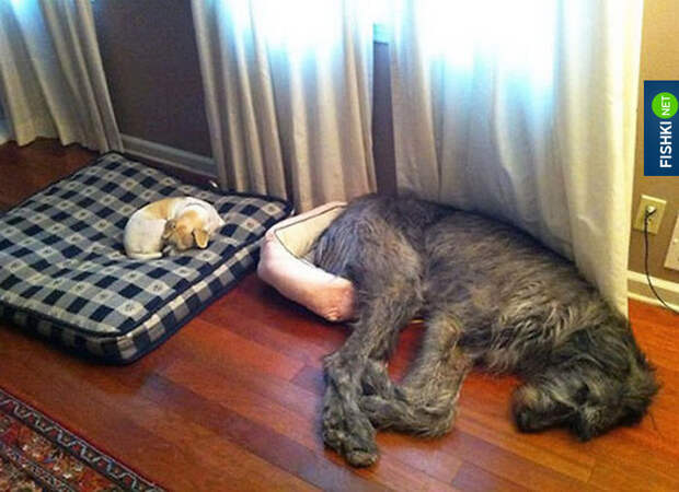 В вашем доме или в вашей квартире живут животные? Как вы к ним относитесь?