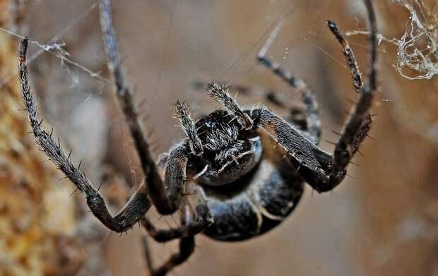 Ядовитые пауки терроризируют жителей Ростовской области