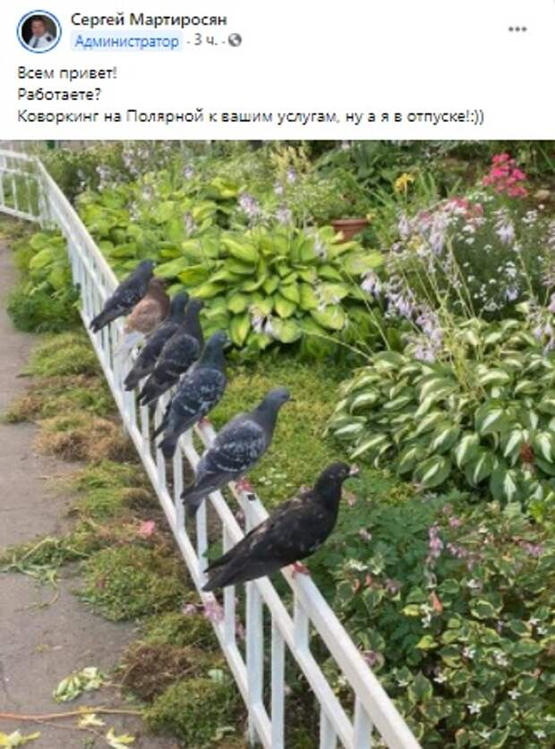 Фото дня: птичий совет на Полярной