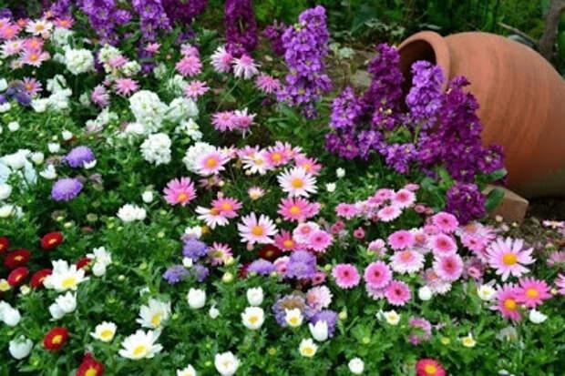 Как создать клумбу непрерывного цветения....